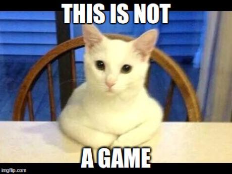serious_cat.jpg